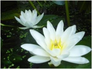 Find peace in nature